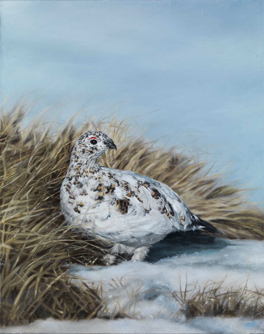 ptarmigan oil painting game birds sporting art
