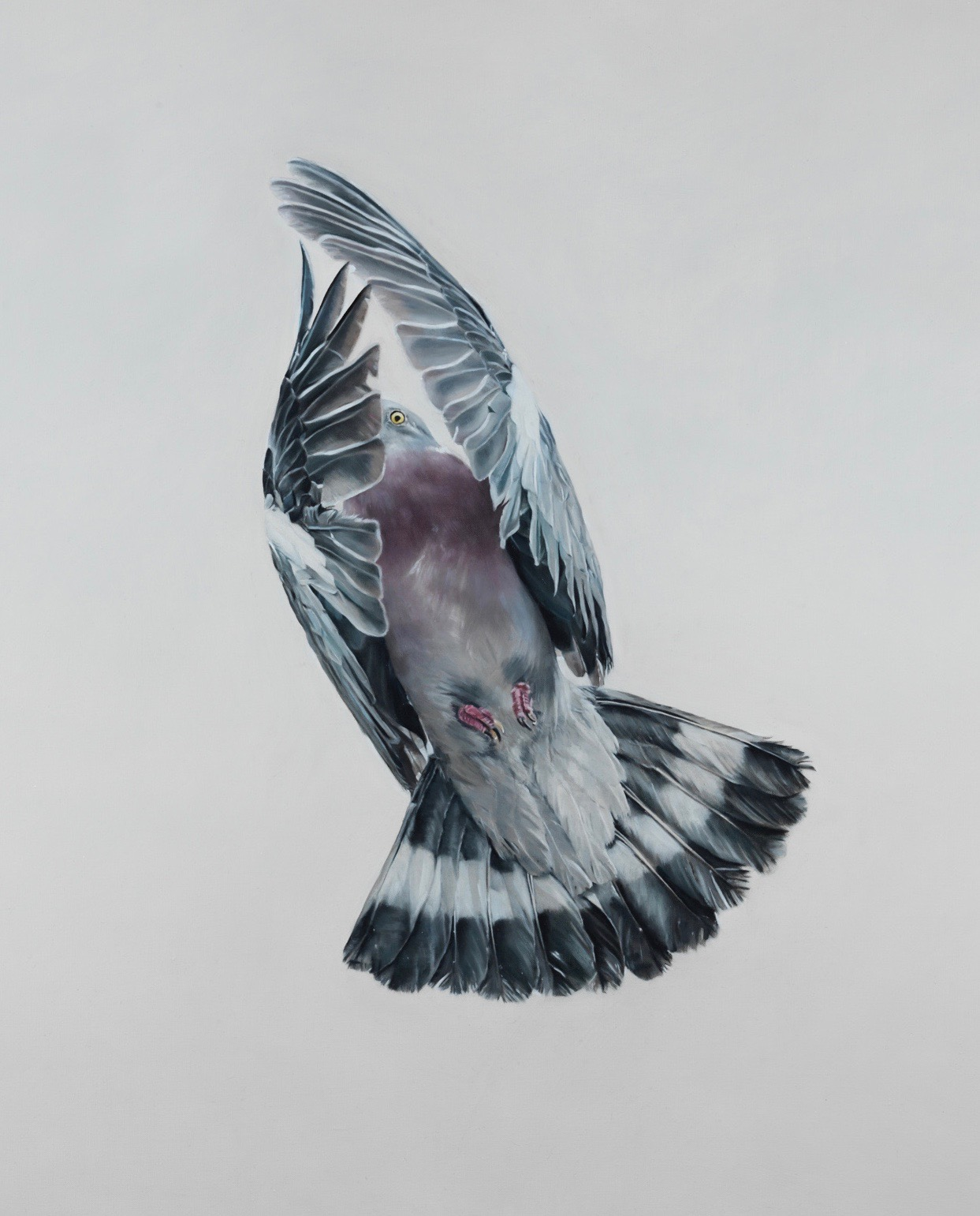 wood pigeon in flight oil painting sporting art